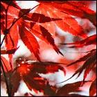Осенние ароматы 2008