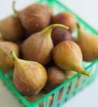 Инжир – священный плод. Часть 1