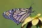 Бабочка крылышками бяк-бяк-бяк!