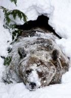 23 марта — день пробуждения медведя