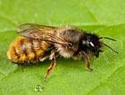 2 июля - Пчельник