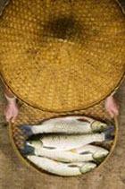 Хотите быть здоровым – ешьте больше рыбы