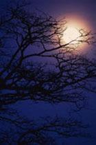 Полнолуние. Время смотреть на Луну