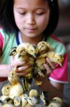 Птичий грипп в России: подробности