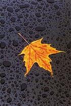 Осеннее обострение