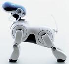 Собака-робот-... диетолог?