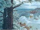 Жителям Москвы пообещали мокрый снег