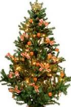 Готовимся к Новому году: выбираем елку