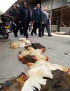 Выявлена мутация птичьего гриппа, опасная для человека