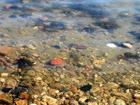 Китай обещает возместить убытки связанные с загрязнением Амура