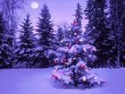 В Кремле с 25 декабря по 9 января пройдут новогодние елки