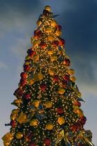 Возобновленная традиция – живая елка на Соборной площади