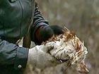 Украина не вводила ограничений на ввоз птицы