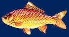 В рыбе из Амура обнаружен нитробензол