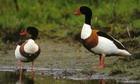 Птицу в Приамурье начнут прививать с 15 апреля