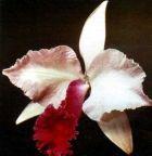Выставка орхидей в Нью-Йорке