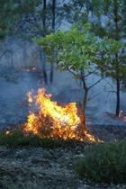 Дальний Восток России: Числов пожаров растет, площадь - уменьшается