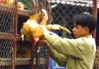 Ученые из Вьетнама расшифровали геном вируса птичьего гриппа