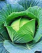 От капустной диеты растёт грудь