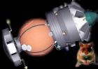 Этой осенью в космос впервые отправятся хомячки