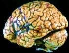 Повреди определенный участка мозга - бросишь курить