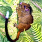 В Перу обнаружены неизвестные науке животные