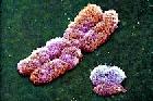 Отсутствие следов спермы не помешает выявить насильника