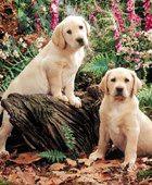Дом для престарелых собак