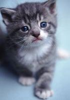Кошки: такие очаровательные и ужасные
