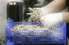 """Нидерландские власти ввели запрет на """"волшебные грибы"""""""