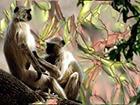Вице-мэра Дели убили обезьяны