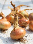 Полезная диета – фруктово-овощная