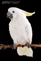 Попугай показал удивительные способности