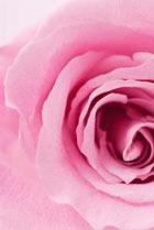 Юбилейный аромат для P&G Prestige Beaute