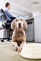 В Австралии собак можно брать на работу