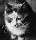 Сумки… из котов