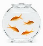 Домашние рыбки и комнатные растения вредят здоровью?