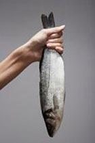 Жирная рыба надолго сохранит память