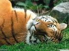 25% млекопитающих - на грани вымирания