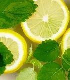 Мята – эффективное средство против кишечных расстройств
