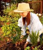 Растения помогают избежать развития инсульта и заболеваний сердца