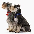Собаки тоже завидуют друг другу!
