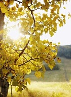 Утреннее солнце - враг зимней депрессии
