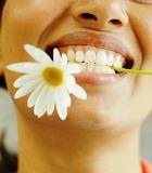 Учёные научились выращивать здоровые зубы