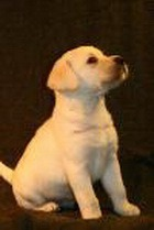Услуга клонирования любимого пса обошлась в $155 тыс.