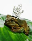 Лягушачья свадьба