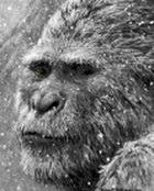 На Кузбассе ученые готовятся к встрече со «снежным человеком»