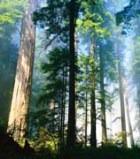 Деревья могут отправлять sms?