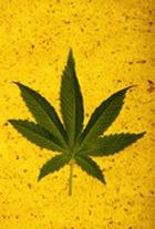Более 30% старшеклассников пробовали наркотики