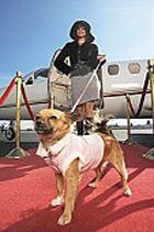 В США начали работу первые в мире авиалинии для животных